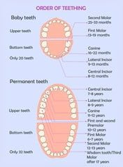 The order of the appearance of teeth in children